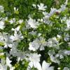 Белые цветы в саду: описание, название и фото идеи красивого оформления