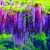 Вьющиеся растения для сада и дачи — фото обзор с названиями и описанием растений