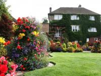 Декоративные кустарники для дачи и сада — фото обзор красивых вариантов декорации