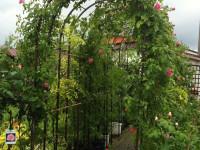 Особенности садовых арок — описание разновидностей, фото лучших идей для дачи