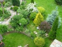 Хвойные растения для сада: фото обзор, виды, названия и советы по уходу