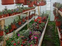 Ахименес — какой требуется уход за самым популярным комнатным растением? 71 фото и советы садоводов