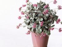 Каланхоэ: как вырастить цветок? 61 фото и пошаговая инструкция по уходу