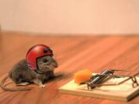 Ловушки для мышей: плюсы и минусы мышеловок. 72 фото ловушек, которые действительно работают