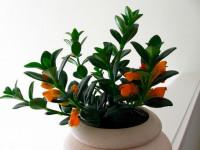 Нематантус — правильный полив и забота за набирающим популярность комнатным растением (60 фото)
