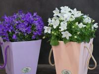 Какие цветы в горшке можно подарить на 14 февраля