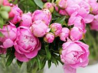 ТОП-10 лучших цветов в подарок на 8 марта
