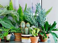 Как позаботиться о комнатных цветах осенью: полезные советы и рекомендации