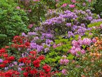 30 зимостойких многолетних цветущих кустарников для Подмосковья