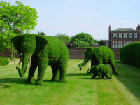 Как сделать газон — пошаговая инструкция для начинающих садоводов (50 фото)