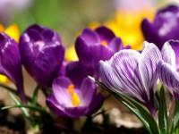 Многолетние цветы для дачи, цветущие все лето (75 фото)
