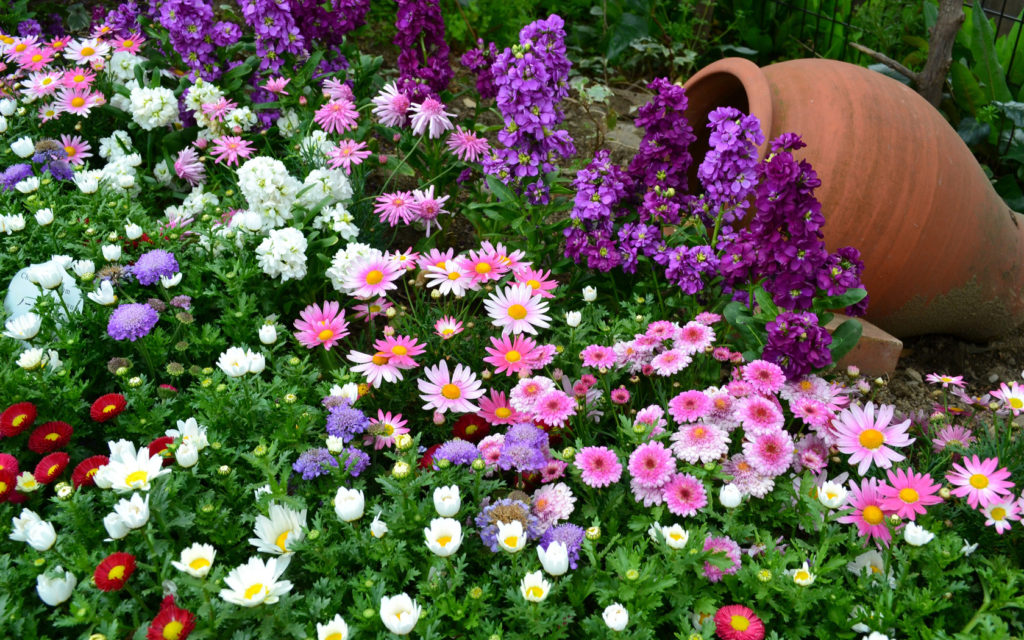 Уличные цветы которые сажают осенью 52