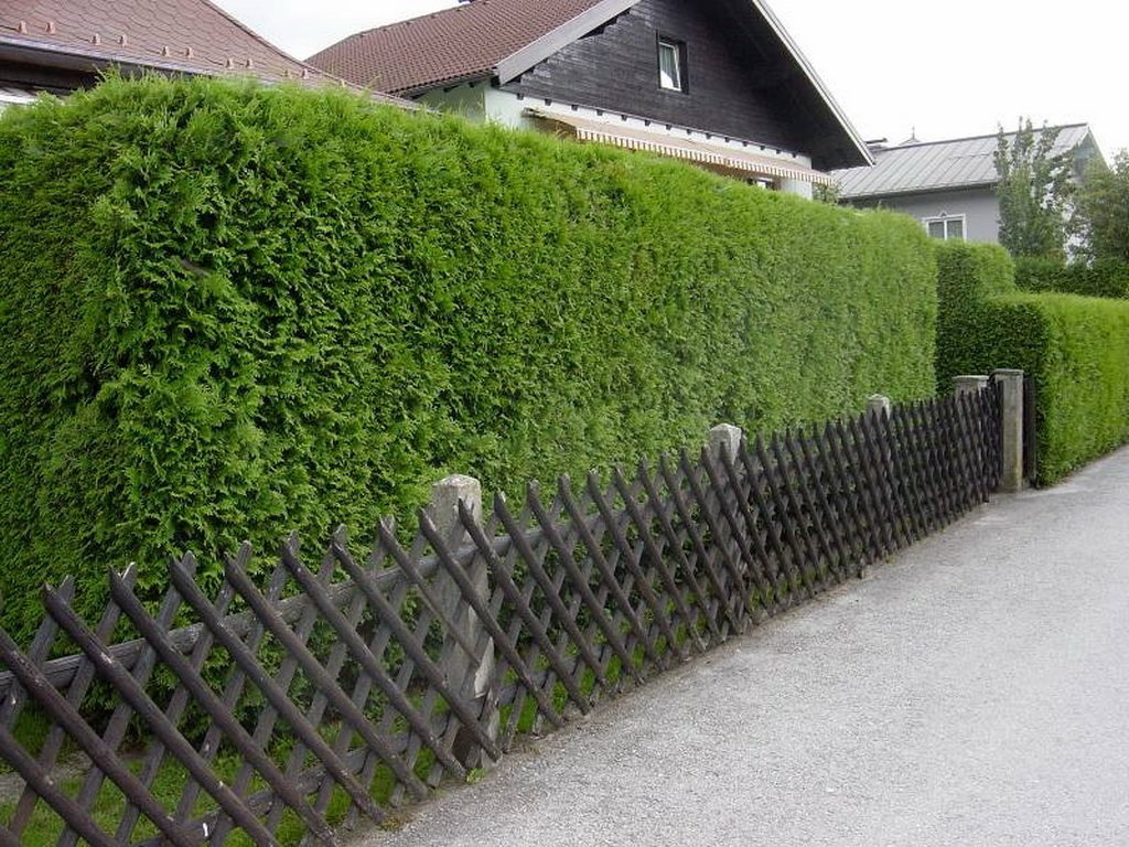 Фото и дизайн живых изгородей