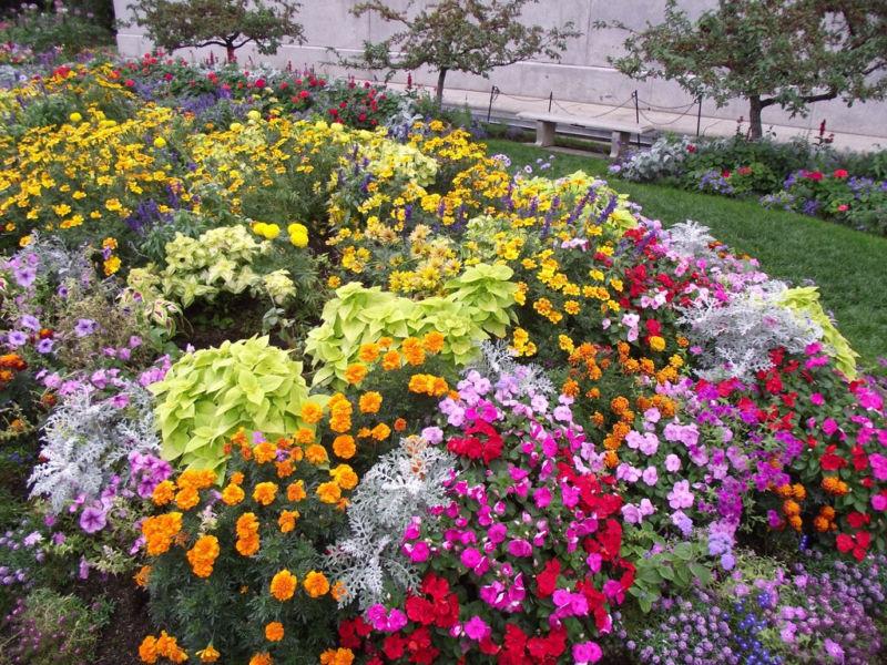 Фото простых садовых цветов