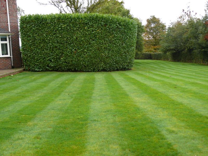 hedge-cutting-15