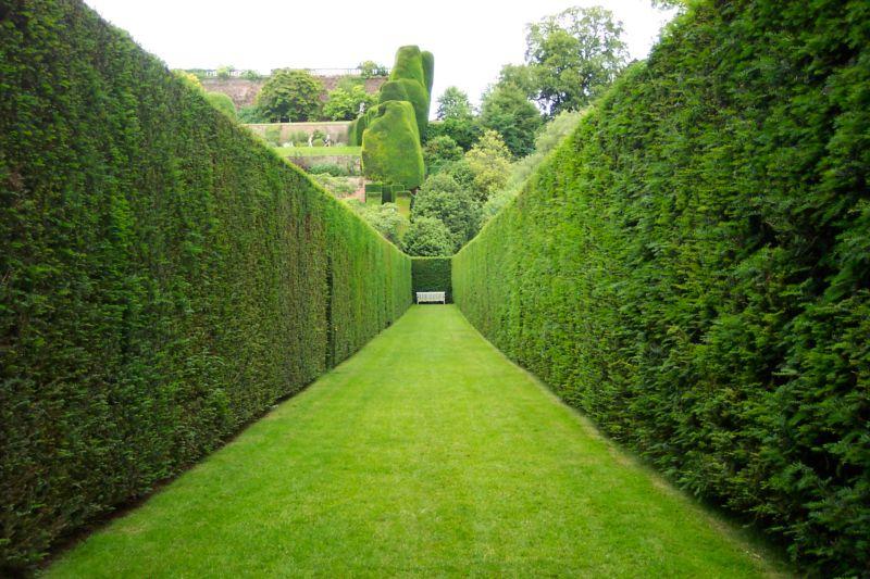 naming-hedging-plants
