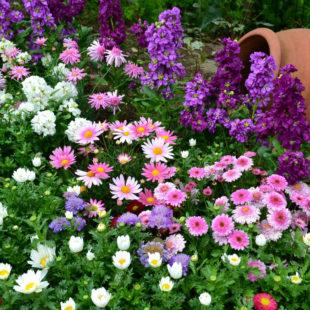 Низкорослые цветы: уход, оформление клумб, правильное сочетание, 100 фото красивых идей оформления