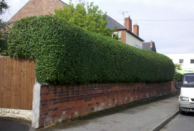 privet-hedge-trimming-nottingham-e1392138382600