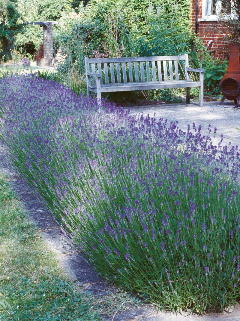 rx-dk-htg19802_lavender-hedge_s3x4-jpg-rend-hgtvcom-1280-1707