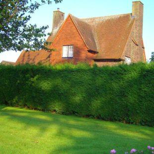 Живая изгородь на даче своими руками — обзор, пошаговая инструкция (100 фото)