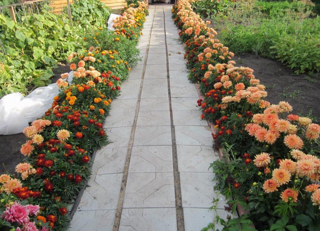 Какие цветы посадить вдоль дорожки на даче
