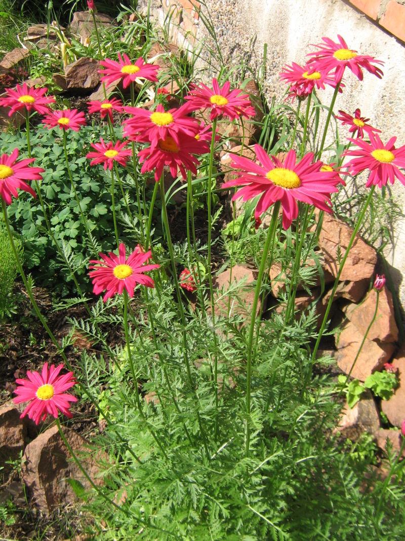 Каталог цветов: названия и фото, описание цветов, виды и ...