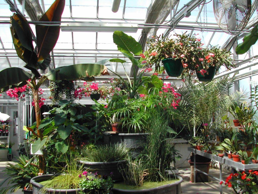 Зимний сад в частном доме своими руками фото фото 26