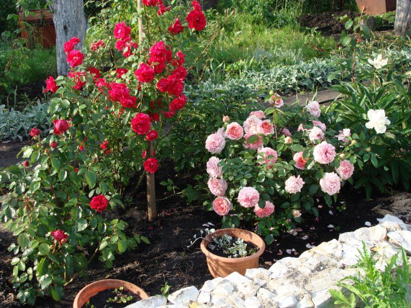 Дизайн сада своими руками: фото и интересные идеи 7