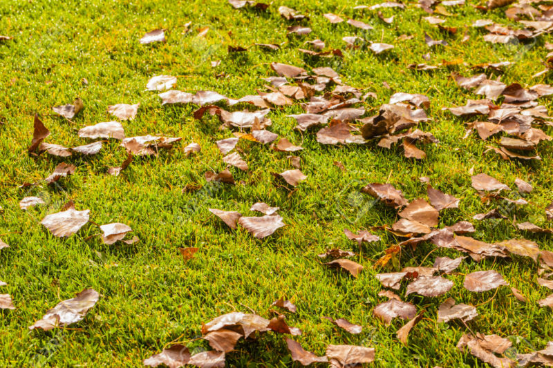dead leaves on a beautiful lawn in a calm autumn day