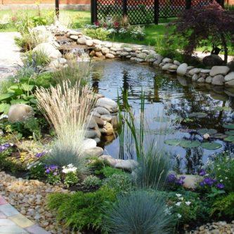 Растения для пруда: отличное украшение ландшафтного дизайна (45 фото)
