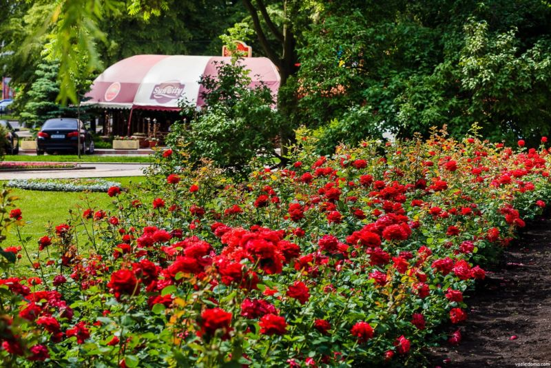 Дизайн сада своими руками: фото и интересные идеи 100