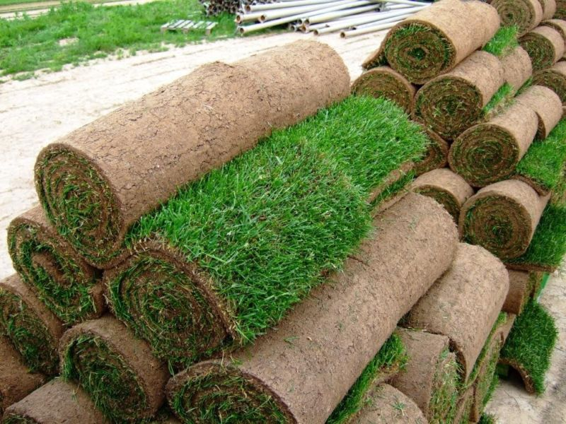 Рулонный газон: укладка, уход, фото обзор разновидностей рулонных газонов для участка