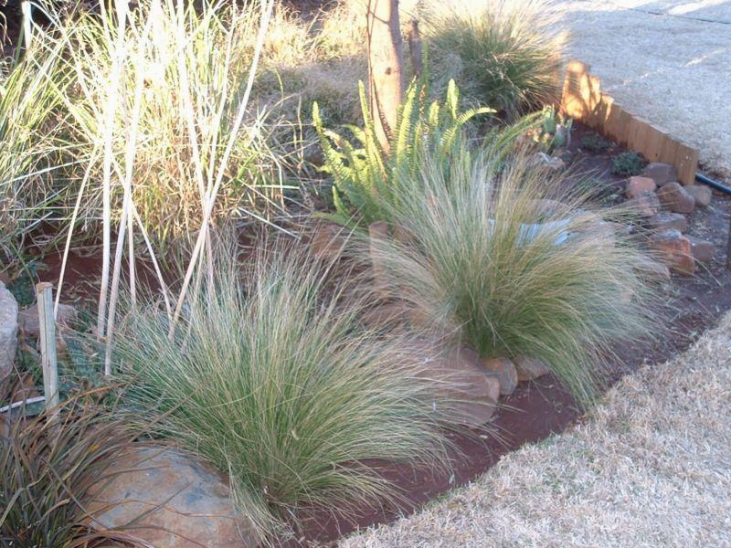7-grasses2