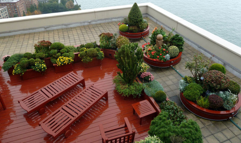 conifers-shrubs-in-containers-on-manhattan-rooftop-reduced