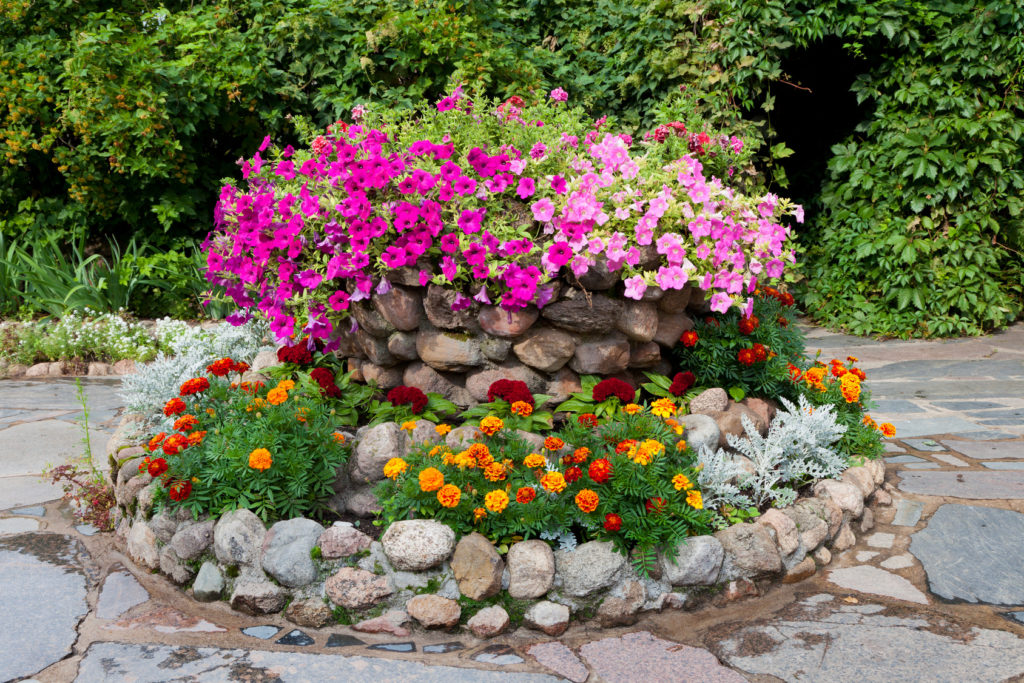 flower bed with petunia and marigold. Landscape design