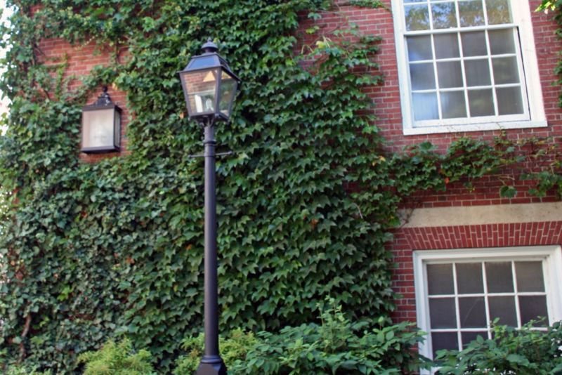 harvard_campus_ivy2_b