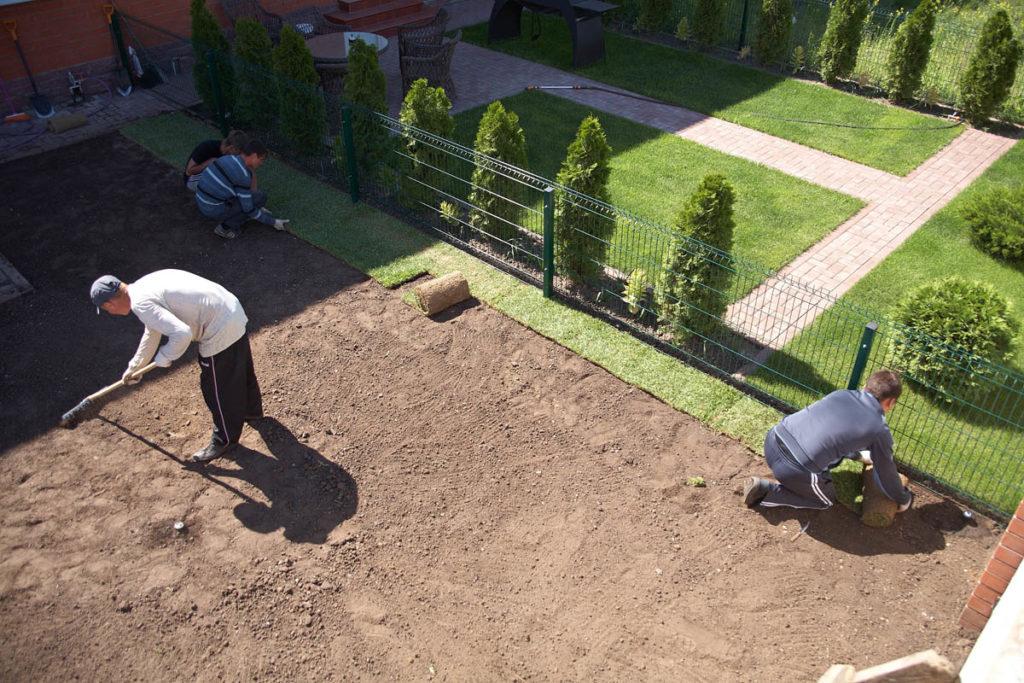 Технология выращивания рулонный газон 97