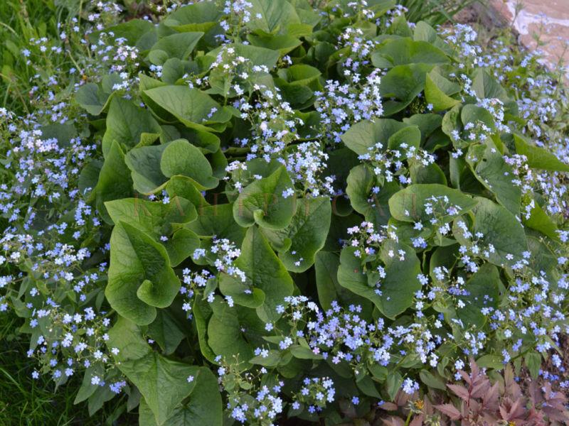 Комнатные цветы уход с описанием и фото