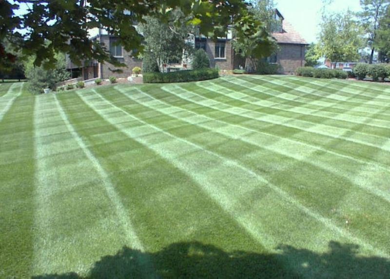 nice_lawn_stripe