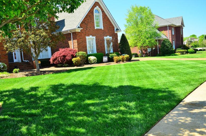 organic-lawn-care