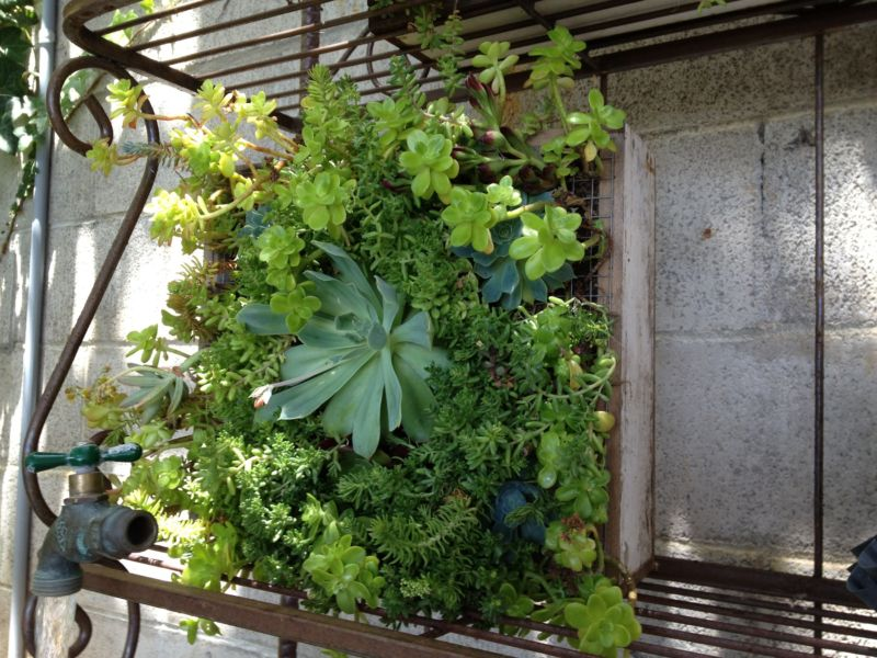 apartment-vertical-gardening