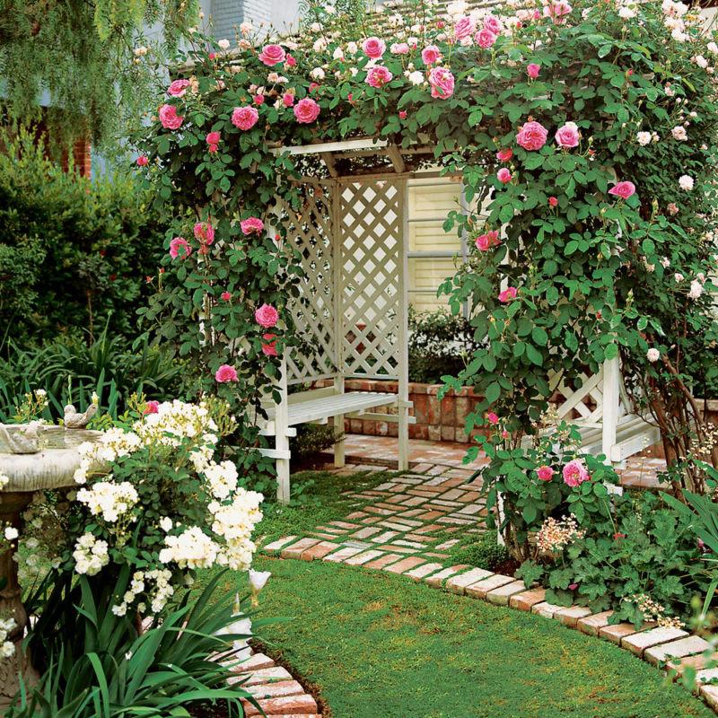 arbor-roses