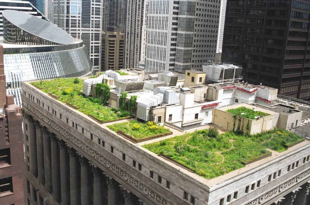 chicago-city-hall-intensive-green-roof