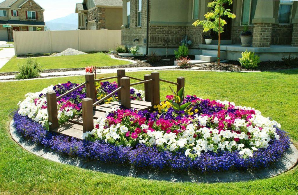 Названия цветов и растений 35