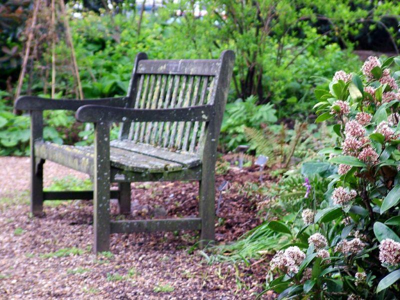 garden-bench-geranium