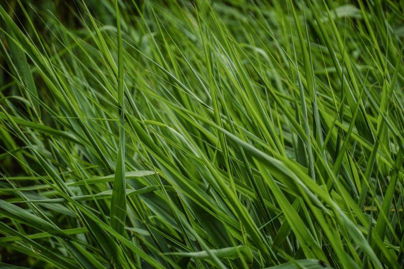 my-denver-landscaper-organiz-lawn-fertilization-information