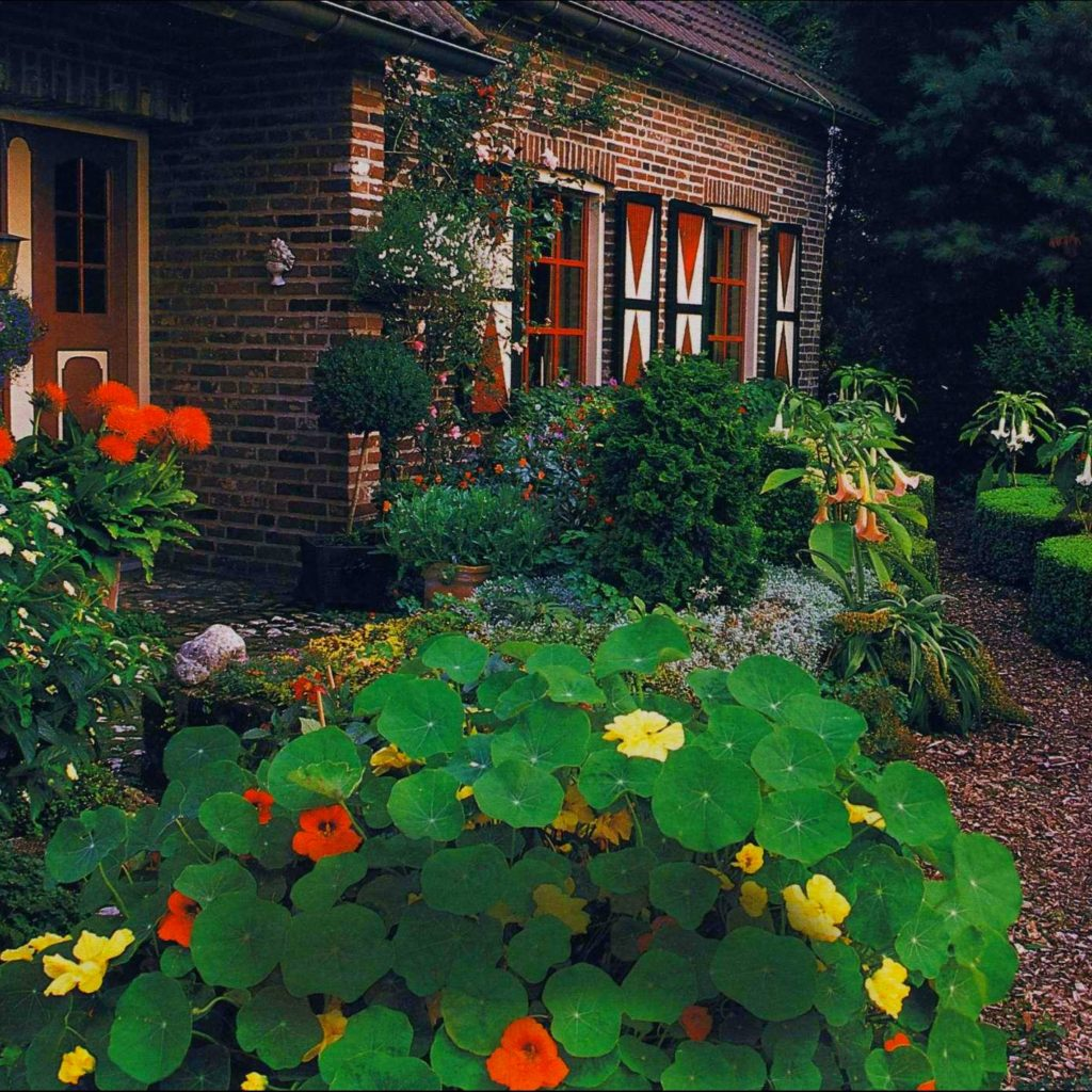 Калибрахоа выращивание из семян в домашних условиях фото пошагово в