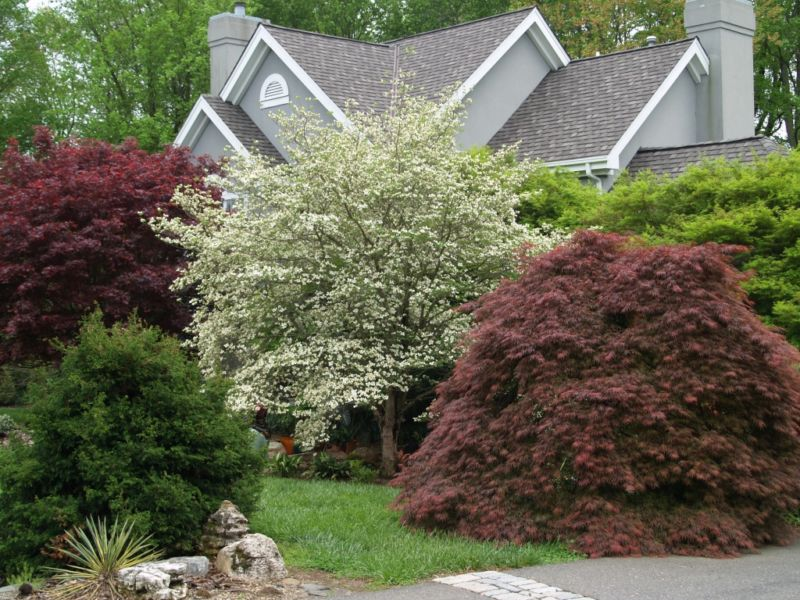 trees-and-shrubs-4