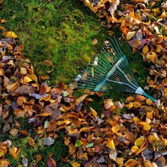 Что нужно сделать в саду в ноябре: советы опытных садоводов